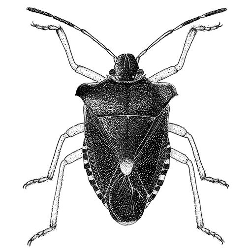 Forest bugs, Drawings of and Insects on Pinterest