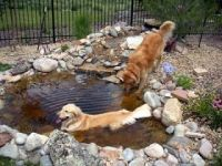 Dog pond, Diy dog and Ponds on Pinterest