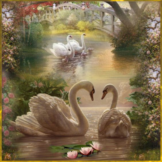 Best ideas about Swans Pure Graceful Swans and Swan Pics on Pinterest  Beautiful Art collages