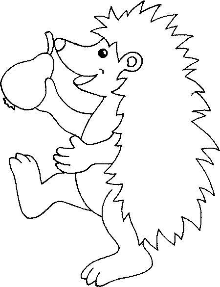 Hedgehog Coloring Pages Animals In Hibernation