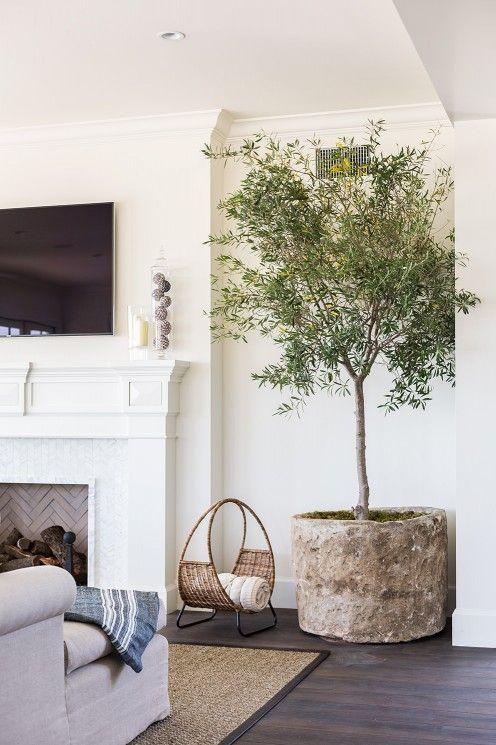 Indoor tree: