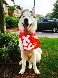 Husky Beanie Baby Costume!