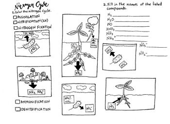 Printables. The Nitrogen Cycle Worksheet Answers