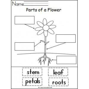Kindergarten lesson plans, Spring plants and Kindergarten