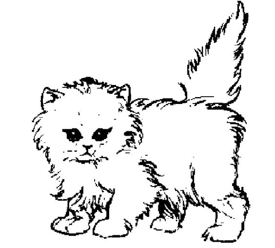thick furry cat coloring page  cats  pinterest  cats