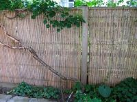 Bamboo Fence - rolled fencing gives instant privacy. Could ...