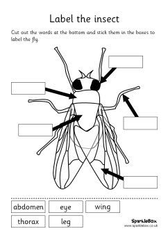 Insect labeling sheets and words...this worked great for