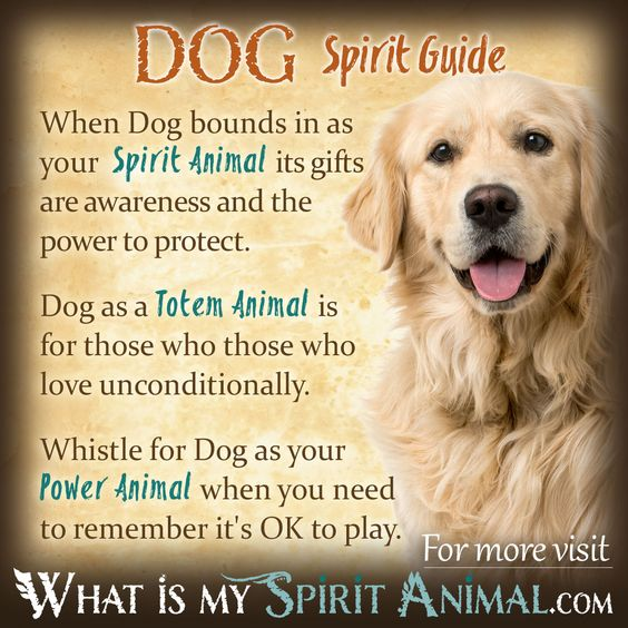 Dog Symbolism Amp Meaning Animal Spirit Guides Spirit