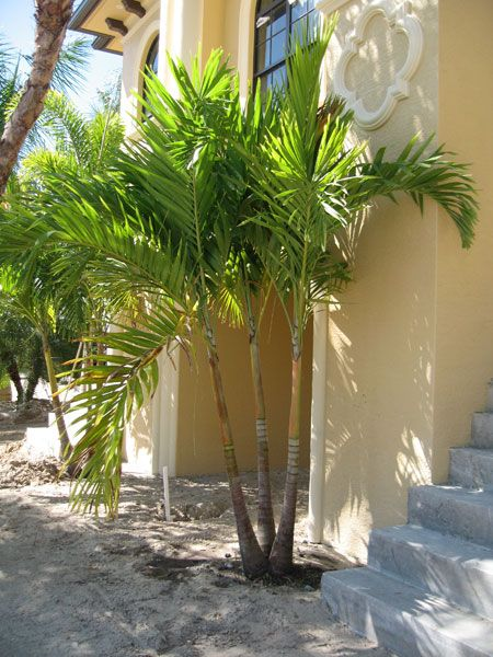 25 Pool Landscaping With Palms Florida Christmas Pictures And Ideas