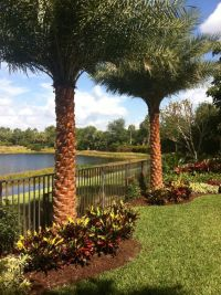 Sylvester date palm landscape install complete | Landscape ...