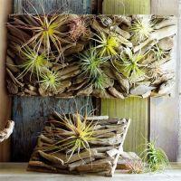 Driftwood Wall Garden. Like a breath of fresh air. Our ...