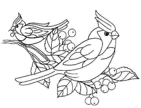 Dibujos para colorear de Pajaros, Aves, Plantillas para