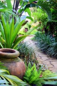 Bird of paradise, Backyard walkway and Banana plants on