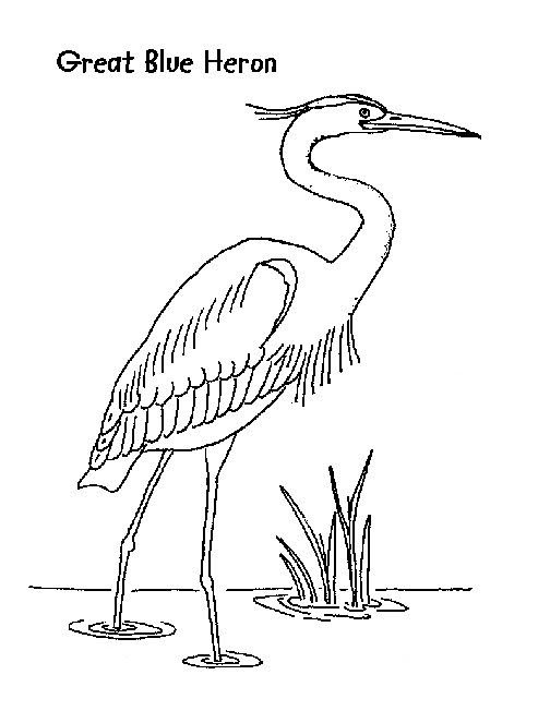Herons, Coloring and Coloring pages on Pinterest
