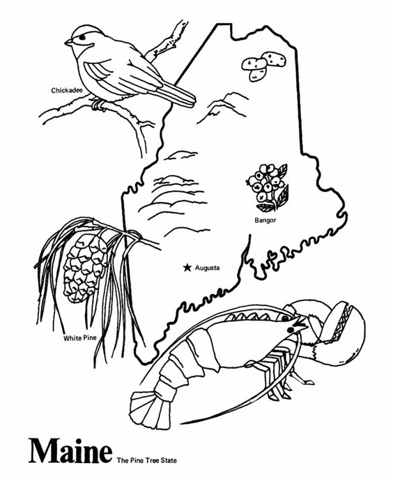 50 states, Coloring pages and Coloring on Pinterest