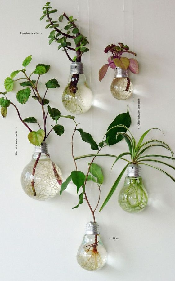 I don't love the article, but I love the plants in light bulbs! Hanging from a shelf or the ceiling in a corner would be even better!: