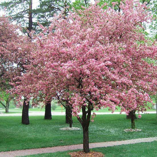 selecting trees yard