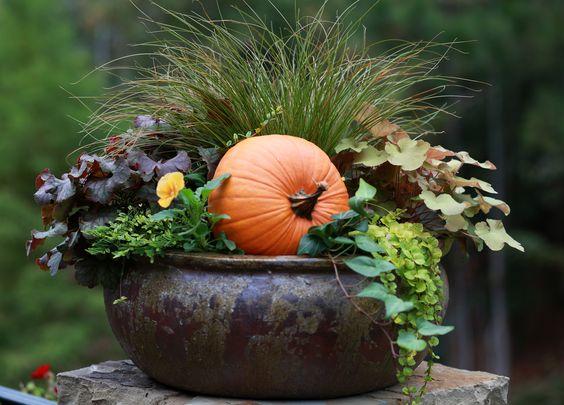 container gardening pumpkin style...: