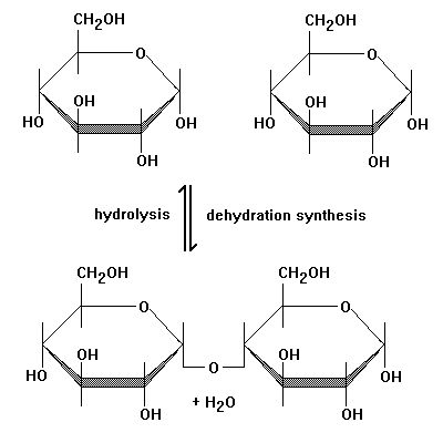 This diagram perfectly shows how Dehydration Reactions and