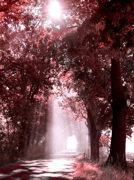 Autumn Fall Live Wallpaper Forest Scenery With Sunbeams Filtered Through The Tree