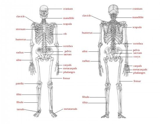 skeleton says... just like simon says except use words