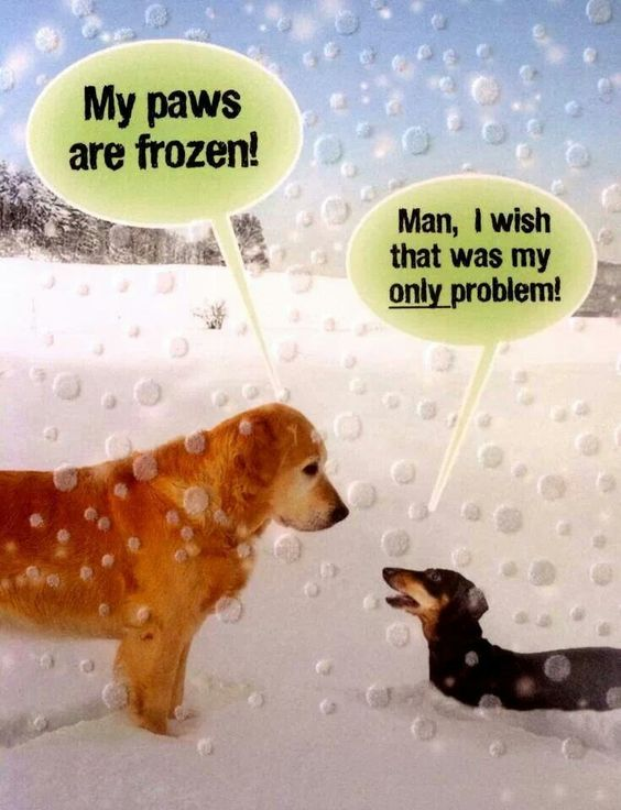 Dogs Problems Dog Humor Just For Fun Pinterest