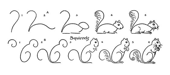 Squirrel, Draw and Graphics fairy on Pinterest
