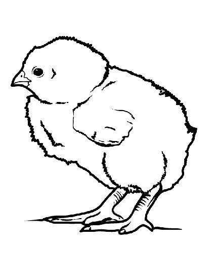 Baby chicks, Little babies and Coloring pages on Pinterest