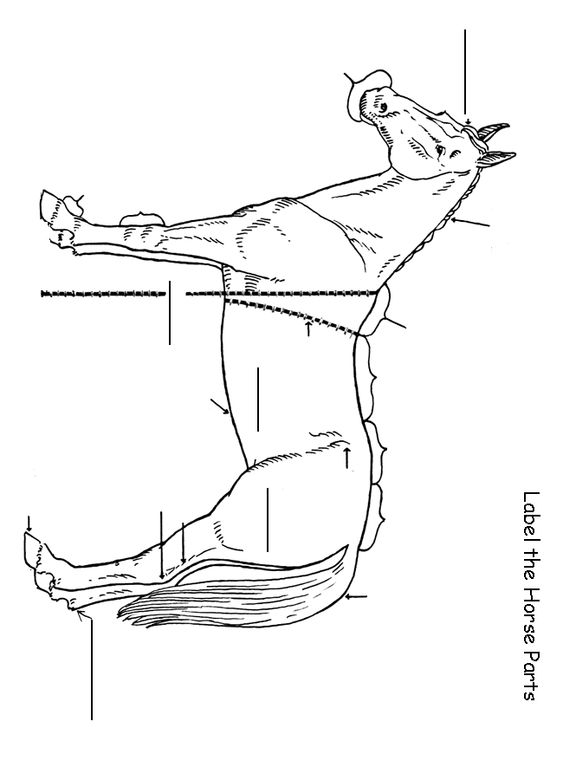 Label the Horse Worksheet : the rest of this workbook can