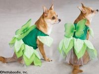 Green Fairy Tails Tinkerbell Pixie Princess Halloween Dog ...