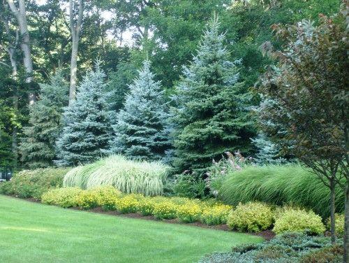 evergreen shrubs and grasses
