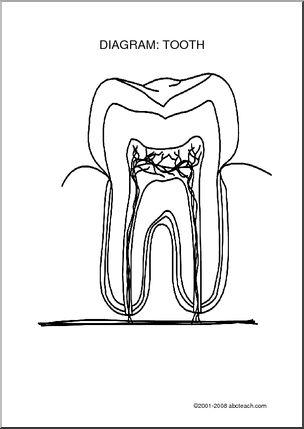 Health and nutrition, Dental health and The teeth on Pinterest