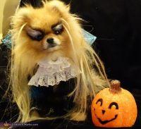 Jareth from Labyrinth Dog's Costume | Dog costumes, David ...