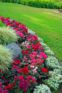 Flower bed border ideas - alyssum, begonia and ornamental ...