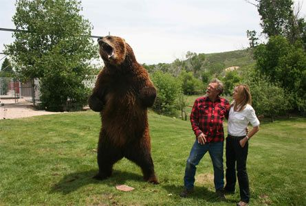 Bart the grizzly bear with his trainer Doug Seus and a ...