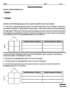 Genetics Amp Punnett Squares Worksheet