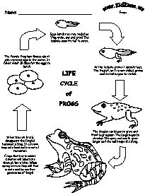 {Frog Life Cycle} This is nice because you can print it