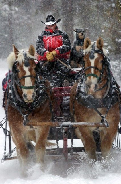 Sleigh Ride I Love The Dog And The Driver Almost As Much