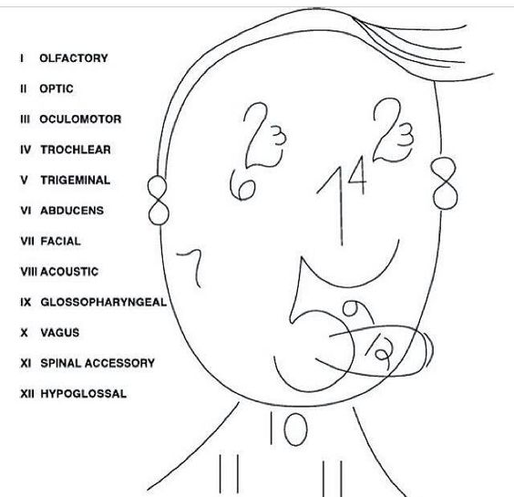 Cranial nerves and Illustrations on Pinterest