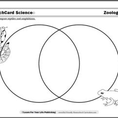 Venn Diagram Of Reptiles And Amphibians Dodge Ram Stereo Wiring Quick Quiz: Name The Difference Between A Reptile Amphibian. | Ideas For House ...