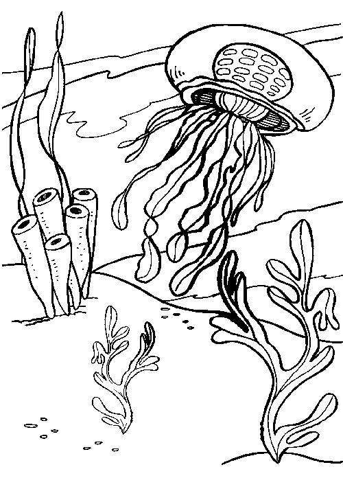 Coloring, Coloring books and Jellyfish on Pinterest