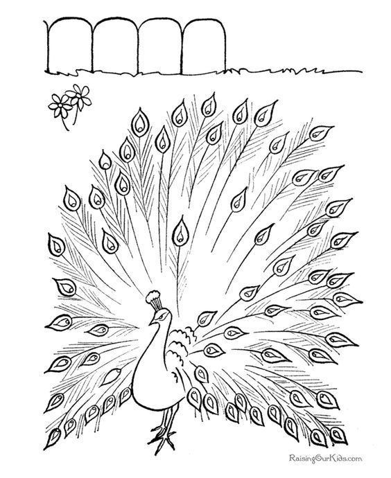 Free printable peacock coloring page... lots of other