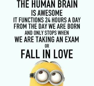 Image result for human funny quotes