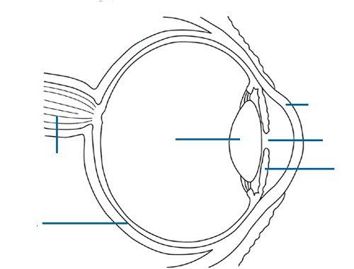 Eyes, Health and Eye anatomy on Pinterest