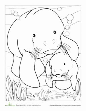 Manatees, Coloring pages and Worksheets on Pinterest