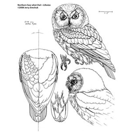 Wood carving pattern of a Owl detail. https://www.facebook