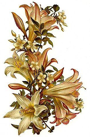 vintage spring flowers clip art