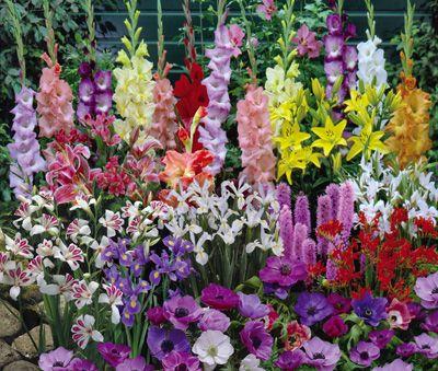 Anemone, Iris, Gladiolus, Crocosmia, Liatris and Lilies