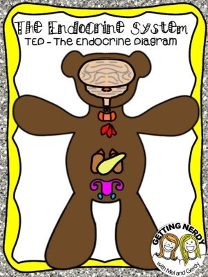 Endocrine System   Endocrine system, Science and Note