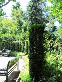 Tall Narrow Growing Irish Yew Privacy Hedge | Hedging ...